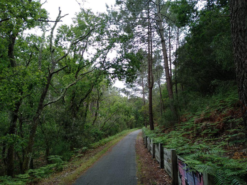 Forêt du Médoc